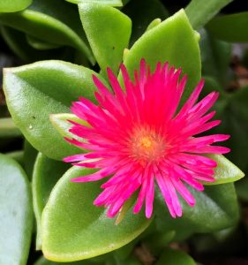 Heart Space Healing - Home page - Pink flower in bloom